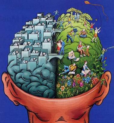 nuestros-emisferios-en-el-cerebro